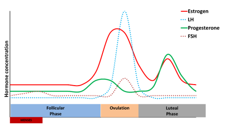 a graph showing hormones during the menstrual cycle